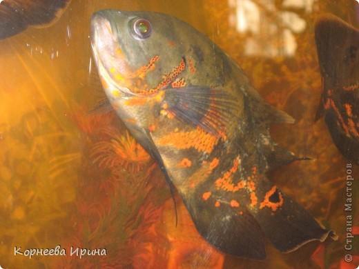Таких рыб делает мой брат. Сначала солит потом придает форму и сушит фото 8