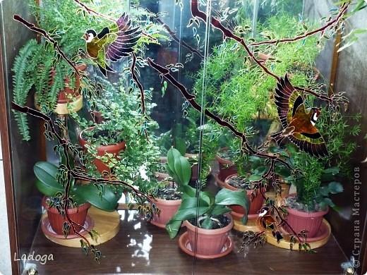 как всегда в поисках поверхностей для декора я решила оформить стекло серванта, который уже давно используется не по назначению, а как мини флорариум. выбрала такой сюжетик с щеглами на веточках. он хорошо будет смотреться на фоне растений и дополнять их немного оживляя ситуацию. эскиз распечатала на принтере, затем разметила на квадраты по 1см, по вертикали и горизонтали прописала цифры, чтобы удобнее было срисовывать фото 4