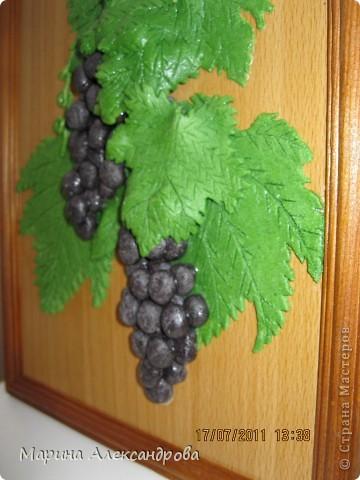 Дорогие жители, это мой первый виноград, уж очень хочется порадовать мою свекровь, как думаете, не стыдно ли его дарить? приму любые комментарии...спасибо всем кто ко мне заглянул! Особая благодарность Марине Архиповой! фото 2