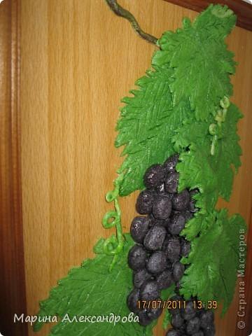 Дорогие жители, это мой первый виноград, уж очень хочется порадовать мою свекровь, как думаете, не стыдно ли его дарить? приму любые комментарии...спасибо всем кто ко мне заглянул! Особая благодарность Марине Архиповой! фото 3
