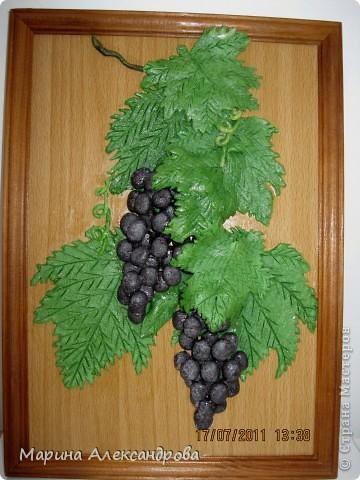 Дорогие жители, это мой первый виноград, уж очень хочется порадовать мою свекровь, как думаете, не стыдно ли его дарить? приму любые комментарии...спасибо всем кто ко мне заглянул! Особая благодарность Марине Архиповой! фото 1