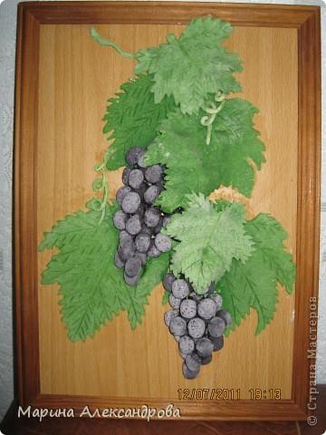 Дорогие жители, это мой первый виноград, уж очень хочется порадовать мою свекровь, как думаете, не стыдно ли его дарить? приму любые комментарии...спасибо всем кто ко мне заглянул! Особая благодарность Марине Архиповой! фото 4