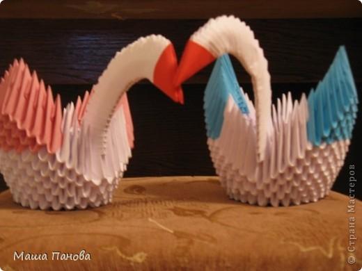 Лебеди, пока без глазок фото 1