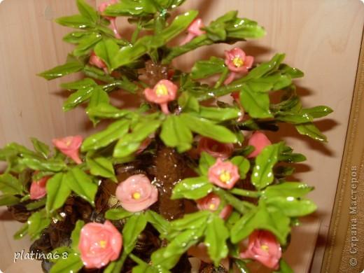 Дерево из роз. фото 8