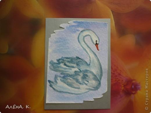 Во всем мире лебеди признаны самыми красивыми птицами. Каждый взмах крыльев, любое движение наполнены грацией и изяществом. Этим прекрасным созданиям посвящена моя новая серия АТС-акварелек) За мной долг для bibka. фото 2