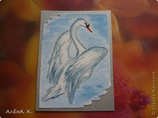 Во всем мире лебеди признаны самыми красивыми птицами. Каждый взмах крыльев, любое движение наполнены грацией и изяществом. Этим прекрасным созданиям посвящена моя новая серия АТС-акварелек) За мной долг для bibka. фото 8