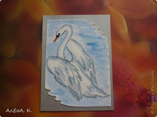 Во всем мире лебеди признаны самыми красивыми птицами. Каждый взмах крыльев, любое движение наполнены грацией и изяществом. Этим прекрасным созданиям посвящена моя новая серия АТС-акварелек) За мной долг для bibka. фото 9