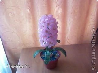 Вот мой любимый гиацинтик который я подарила маме  фото 1
