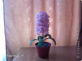 Вот мой любимый гиацинтик который я подарила маме  фото 2