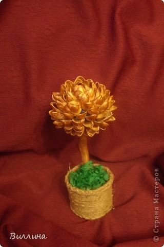 Это мои деревца все вместе фото 2