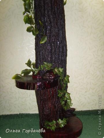 Мне бы фотостудию!!Никак не смогла сфоткать высокое деревце из свежей коры,с загнувшимися краями.Спил внизу--подставка,и сбоку спил- подставка.Большая кора на стволе...Грибы-трутовики.ВОТ ТАКАЯ КОНСТРУКЦИЯ,Тяжёлая,я вам скажу. фото 1