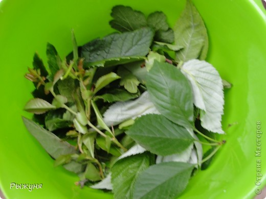 Если знаете все о чае, то такого могу заверить не пробовали :) По утрам я обхожу свой участок и собираю разные листочки для моего садового чая. Первые - это листы малины желтой. Вот такая она у меня. фото 19