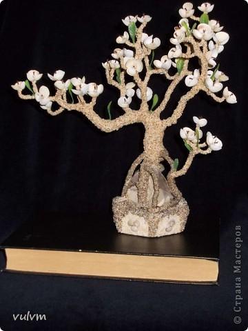 дерево на скале фото 1