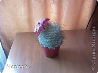 вот мой пушистенький кактусик