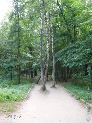 Прогулки, Москва, Ботанический сад, ВДНХ фото 4