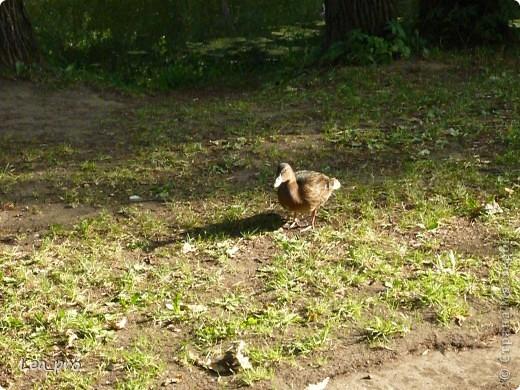 Прогулки, Москва, Ботанический сад, ВДНХ фото 16