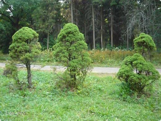 Прогулки, Москва, Ботанический сад, ВДНХ фото 28