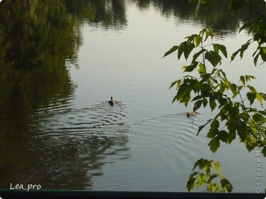 Прогулки, Москва, Ботанический сад, ВДНХ фото 45
