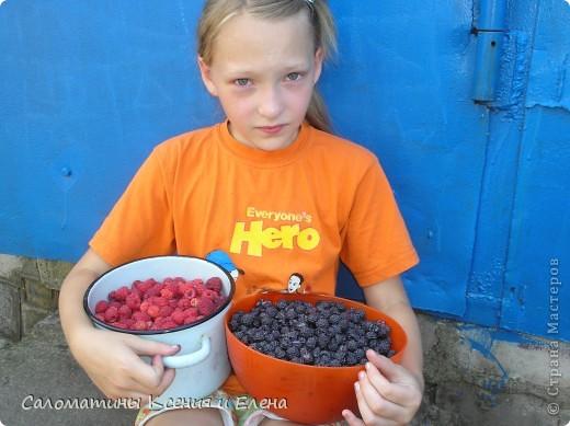 """Вот такая малинка растет в нашем саду """"Черная малина""""    мы ее так называем, а на самом деле это сорт черноплодной малины кумберленд,  можно про нее почитать по этой ссылке. http://www.fazenda-online.ru/garden/136-chernaya-malina.html фото 15"""