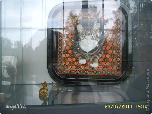 """Сегодня и завтра у нас в городе проходит Международная выставка кошек """"Jelgavas kaķis 2011"""". В которой принимает участие более чем 300 котов, которые являются лучшими представителями своей породы и проделали путь в Елгаву из Литвы, Эстонии, Финляндии, Франции, Чехии, Нидерландов, Швейцарии, Германии, Польши, России, Белоруссии и Латвии. фото 39"""