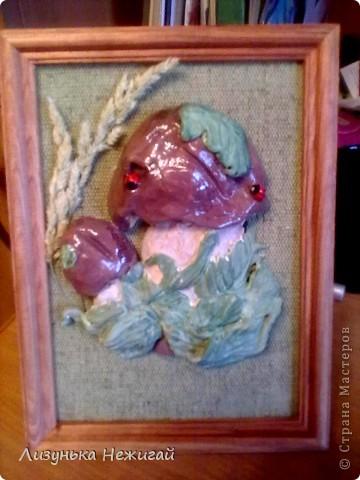 повторюшка солонушка лесная полянка фото 3
