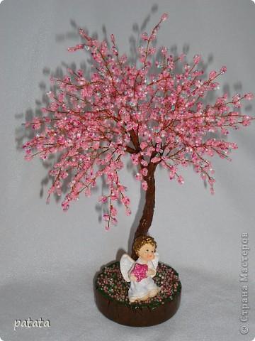 Денежное дерево фото 2
