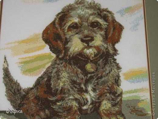 Была у нас когда-то любимая собака - Фофик. Как-то в магазине увидела схему вышивки такого вот песика, очень похожего на нашего Фофку. Никогда не занималась вышивкой, но было очень сильное желание сделать эту работу. И вот результат! фото 2