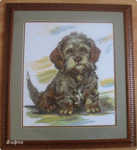 Была у нас когда-то любимая собака - Фофик. Как-то в магазине увидела схему вышивки такого вот песика, очень похожего на нашего Фофку. Никогда не занималась вышивкой, но было очень сильное желание сделать эту работу. И вот результат! фото 1