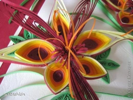 """Здравствуйте, дорогие мастерицы. Вот  выставляю  на  ваш суд  картину, которую я назвала """"Неизвестные"""". Как-то вечером  крутила бумажки  и накрутила  такой  цветик,  а  мужу понравилось и он попросил сделать ему  картину  с  такими  цветами. Ну и  вот...   только что  закончила.  фото 3"""