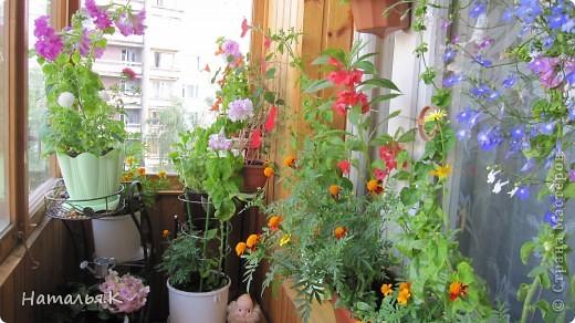 Мне захотелось собрать как можно больше красок лета: цветы с кружащими над ними стрекозами и бабочками, фрукты, девушек на пляже. Получилось вот такое панно. фото 5