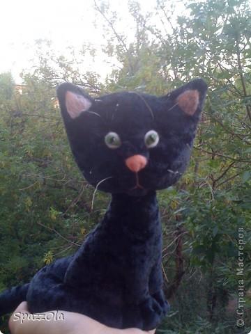 Наверно, в следующей жизни Когда я стану кошкой на-на-на-на   фото 2
