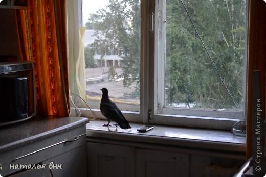 голубь очень красивая птица фото 9