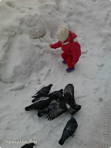 голубь очень красивая птица фото 11