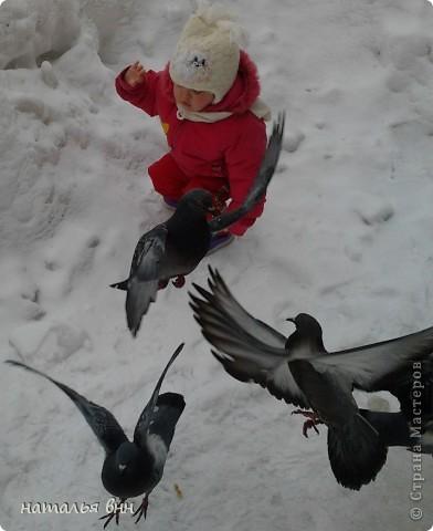 голубь очень красивая птица фото 12