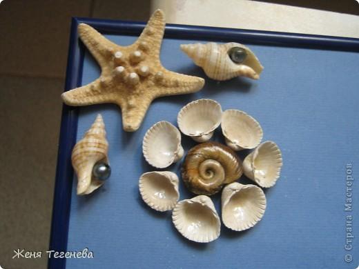 Давно хотела сделать морское панно, да не было материалов. А в этом году впервые за 4 года вырвалась на море, заодно и ракушек подсобрала) фото 3