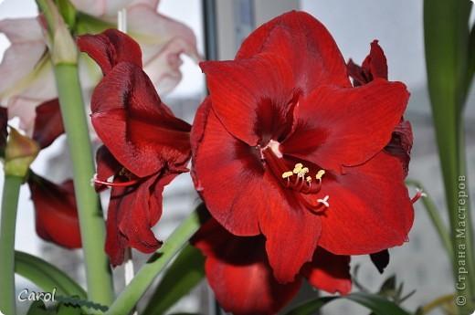 Диаметр каждого цветка29 см. фото 2