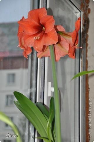 Диаметр каждого цветка29 см. фото 3