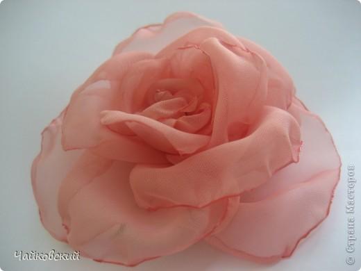 Розы фото 8