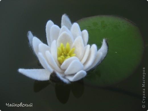 Лилия фото 6