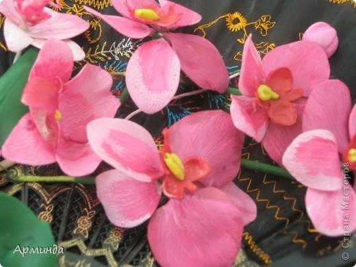 Эксперименты с орхидеями фото 3
