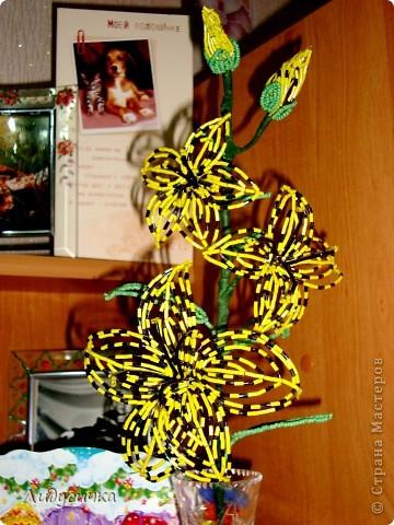 Лилия желтая фото 1