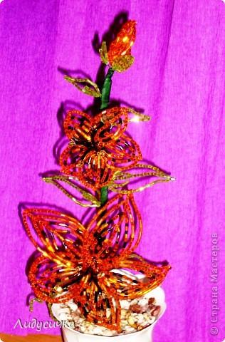 Лилия желтая фото 2
