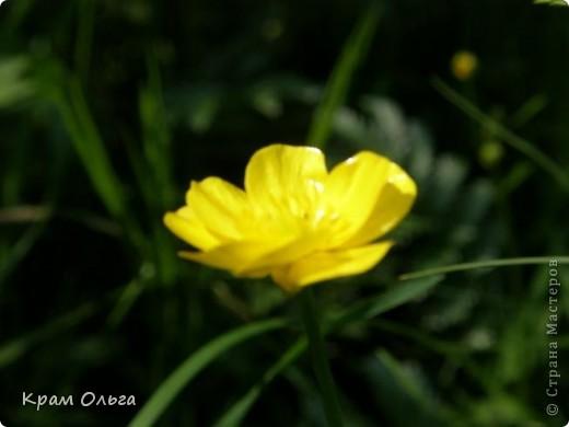 Так цвітуть порічки фото 10