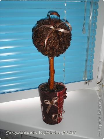 Это кофейное дерево мы сделали в подарок фото 4