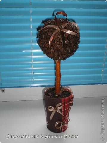Это кофейное дерево мы сделали в подарок фото 7