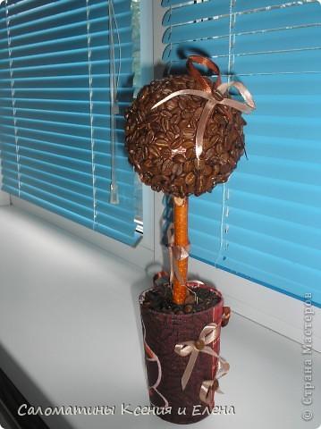 Это кофейное дерево мы сделали в подарок фото 6