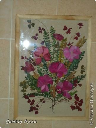 Июнь. Прессованные цветы или Осибана фото 3