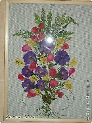 Июнь. Прессованные цветы или Осибана фото 4