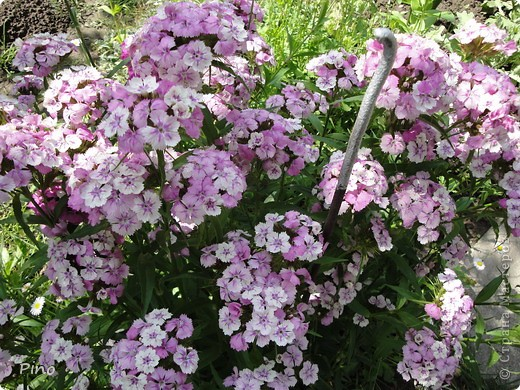 Сначала, я хотела поделится с вами фотографиями лилий, которые растут у нас на даче (мама их очень любит), но пока искала фото, не смогла удержать и в итоге получилась цветочная подборка ^_^ фото 6