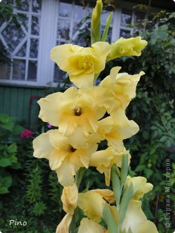 Сначала, я хотела поделится с вами фотографиями лилий, которые растут у нас на даче (мама их очень любит), но пока искала фото, не смогла удержать и в итоге получилась цветочная подборка ^_^ фото 21